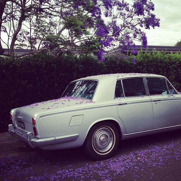 Jacaranda flowers on a Rolls Royce